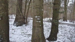 Die Markierung am Wielener See
