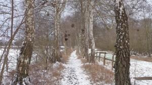"Toller Wanderweg bis ""Wittmoldt Hof"""